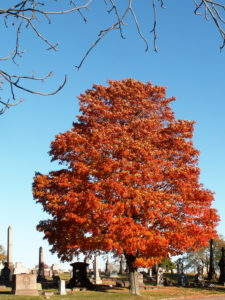 orange-leaved tree